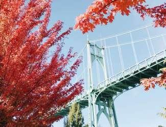 N Portland